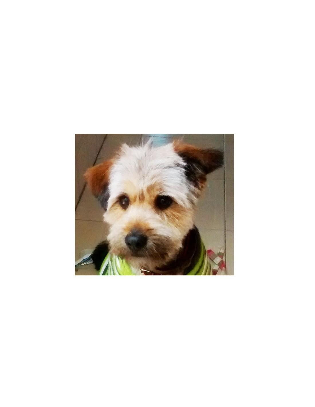 Collar perro piel camel for Collares para perros