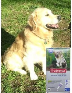 Antiparasitarios para perros - pipeta advantix para perros mayores de 25 Kg