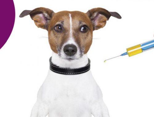 Primera visita al veterinario: Primeras vacunas