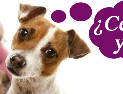 Los perros sufren celos al igual que los seres humanos