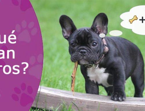 Ya podemos saber lo que piensan nuestros perros
