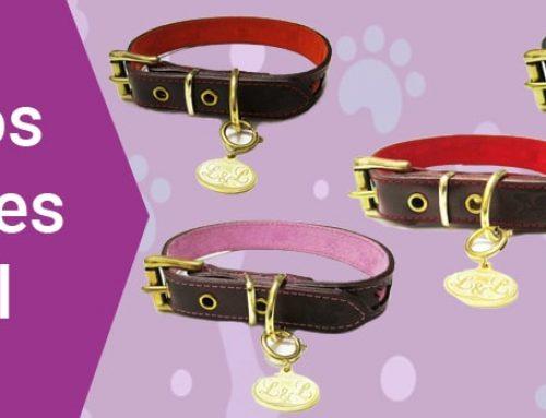 Collares de piel elegantes, para perros elegantes
