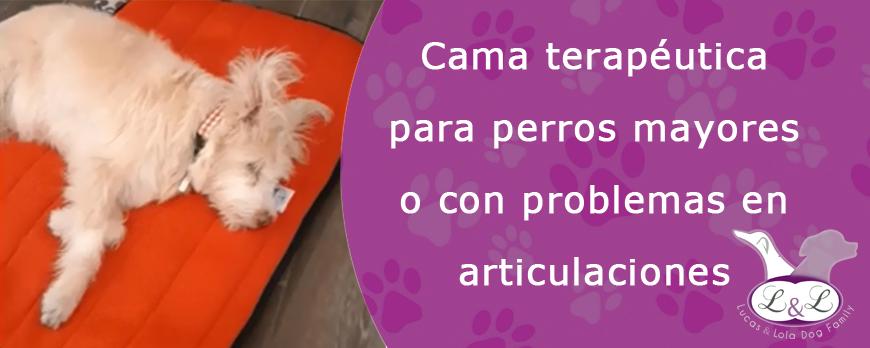 Cama terapéutica para perros