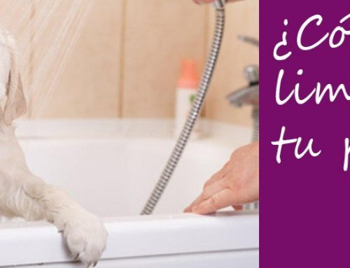 ¿Cómo limpiar a tu perro de forma rápida?