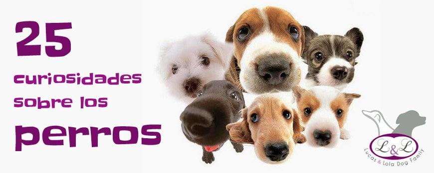 25 Curiosidades sobre perros