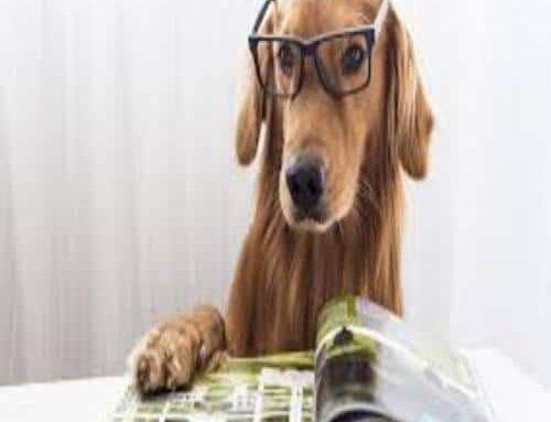 18 datos curiosos sobre los perros que seguramente desconocías