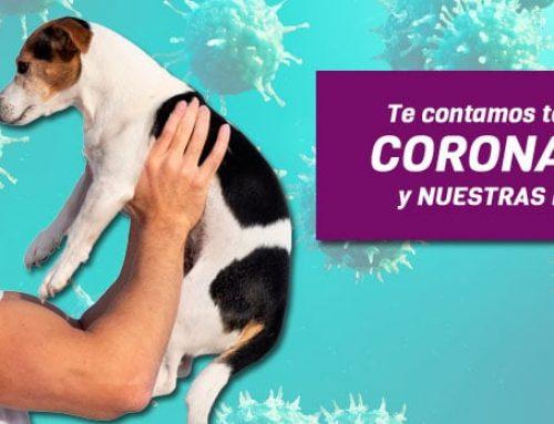 Coronavirus (COVID-19) y nuestras mascotas