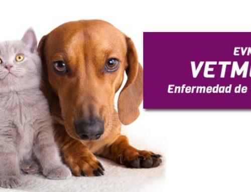 Uso de Vetmedin en la enfermedad valvular mitral