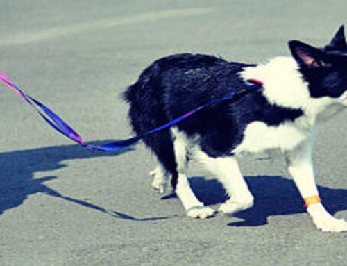 Criterios para medir la salud de nuestro perro
