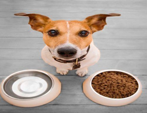 Nutrición animal: nociones básicas