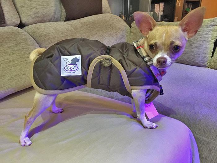 abrigo perro mini