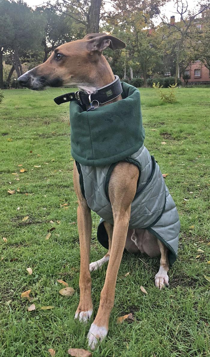 abrigo impermeable galgo