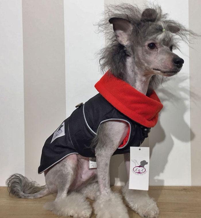 abrigo-impermeable-perro