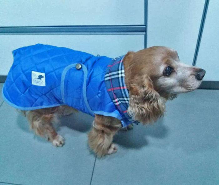 abrigo-perro-impermeable-azul