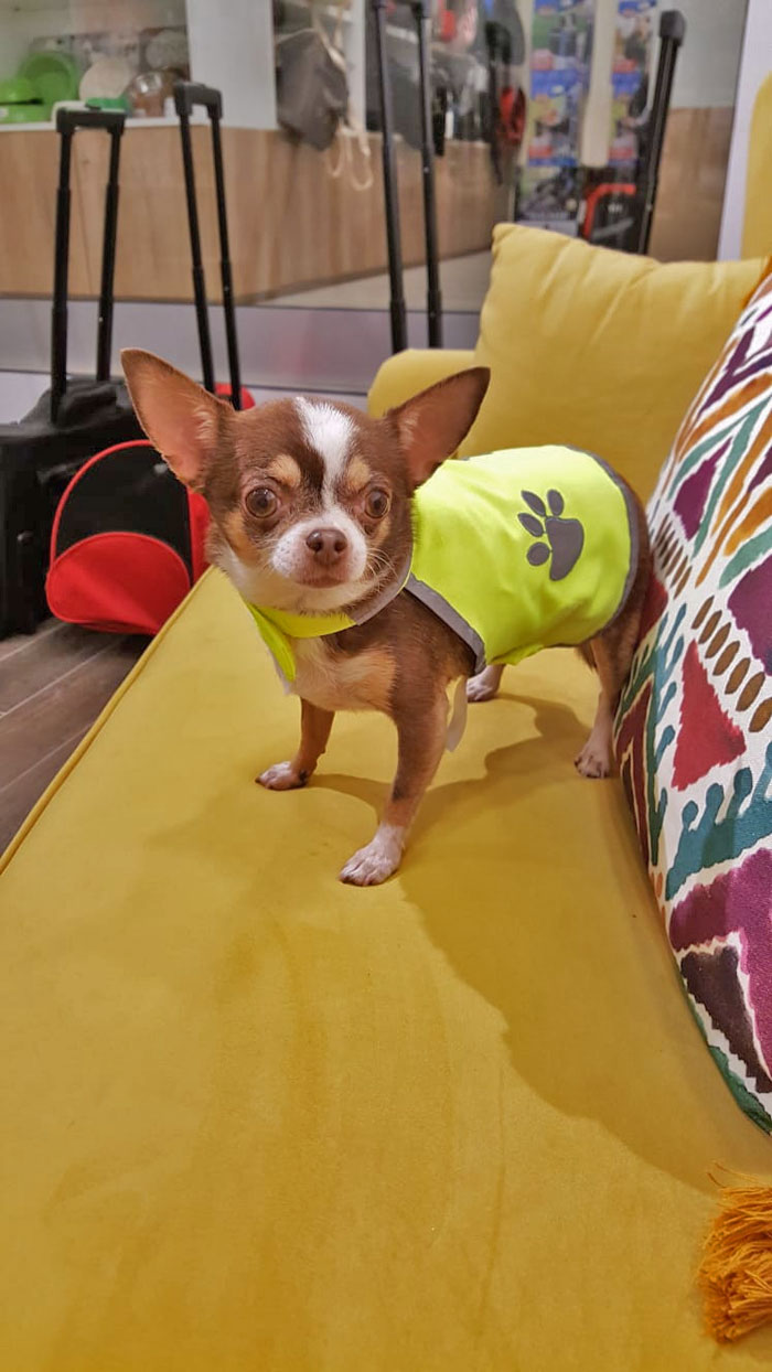 chaleco-seguridad-perro