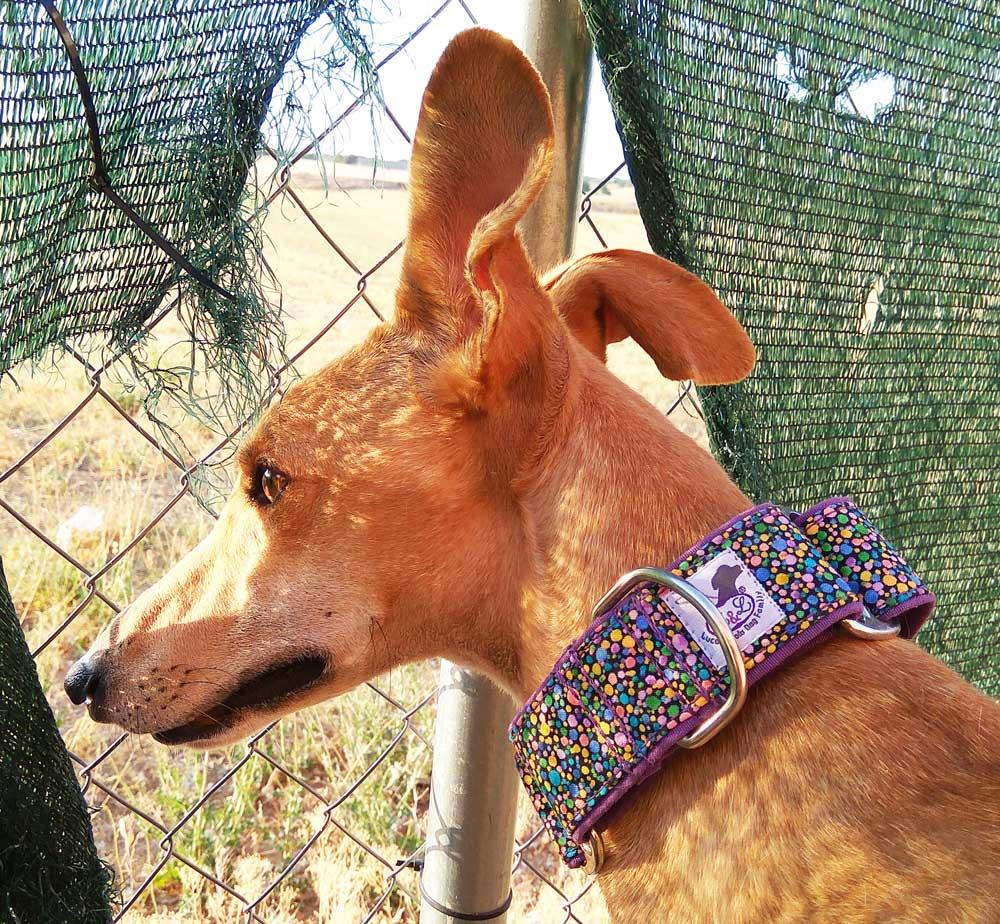 collar martingale galgo