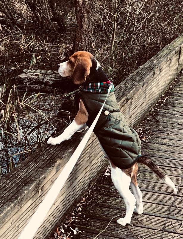 correa-flexi-perro