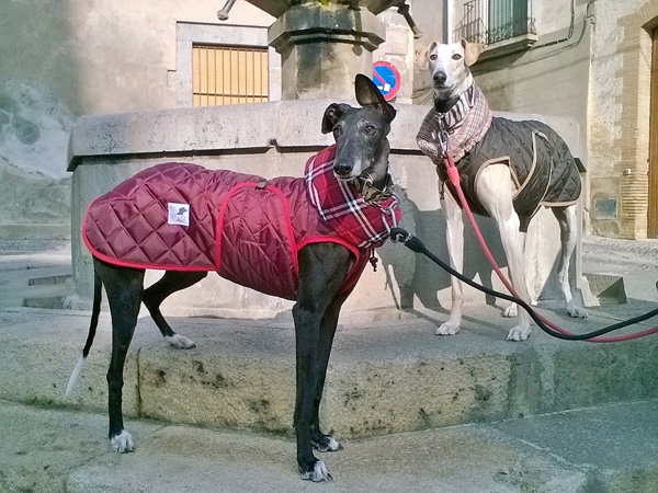 abrigo-impermeable-para-galgo-color-granate