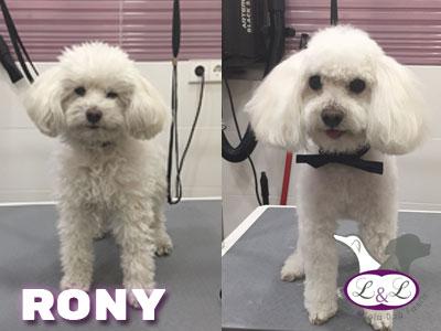 peluqueria_perros/champu-para-perros-rony