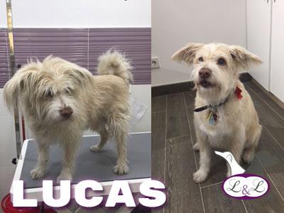 Lucas en la peluqueria de Lucas&lola