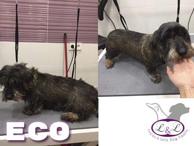 perro_con_lazo_eco