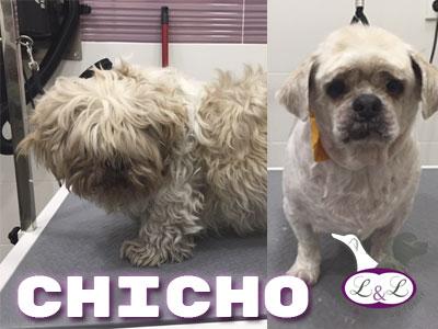ship_shu_chicho