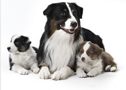 Pipetas para cachorros
