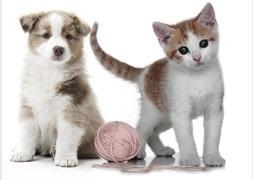 Pipetas para Gatitos
