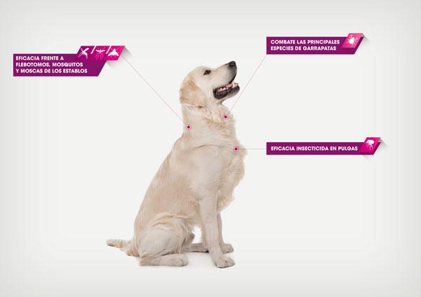 Protección contra garrapatas y pulgas en perros