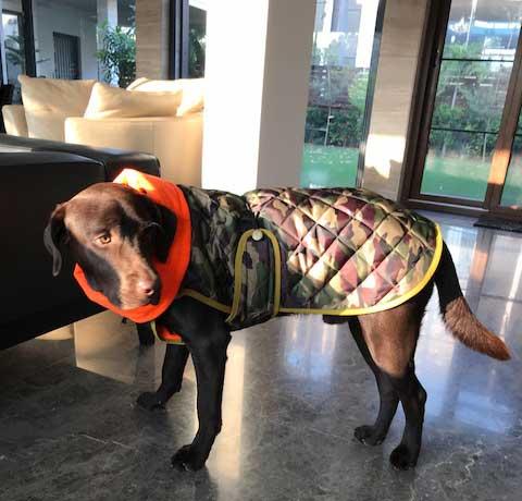 abrigo camuflaje perro