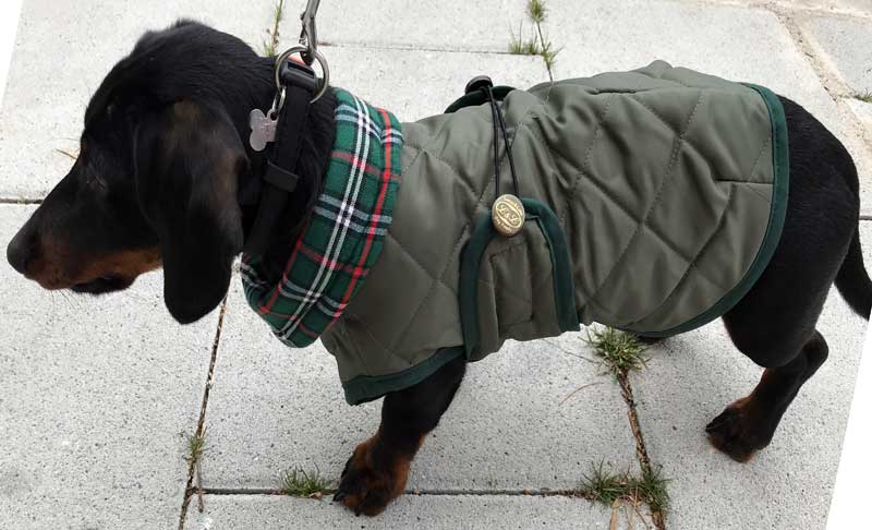 abrigo acolchado teckel