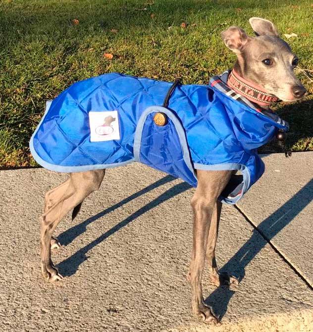 abrigo azul para piccolo