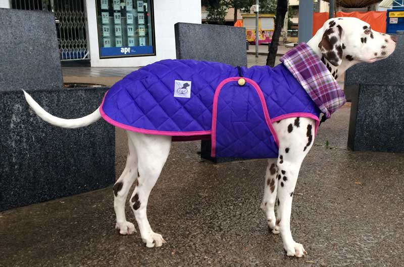 abrigo para dalmata