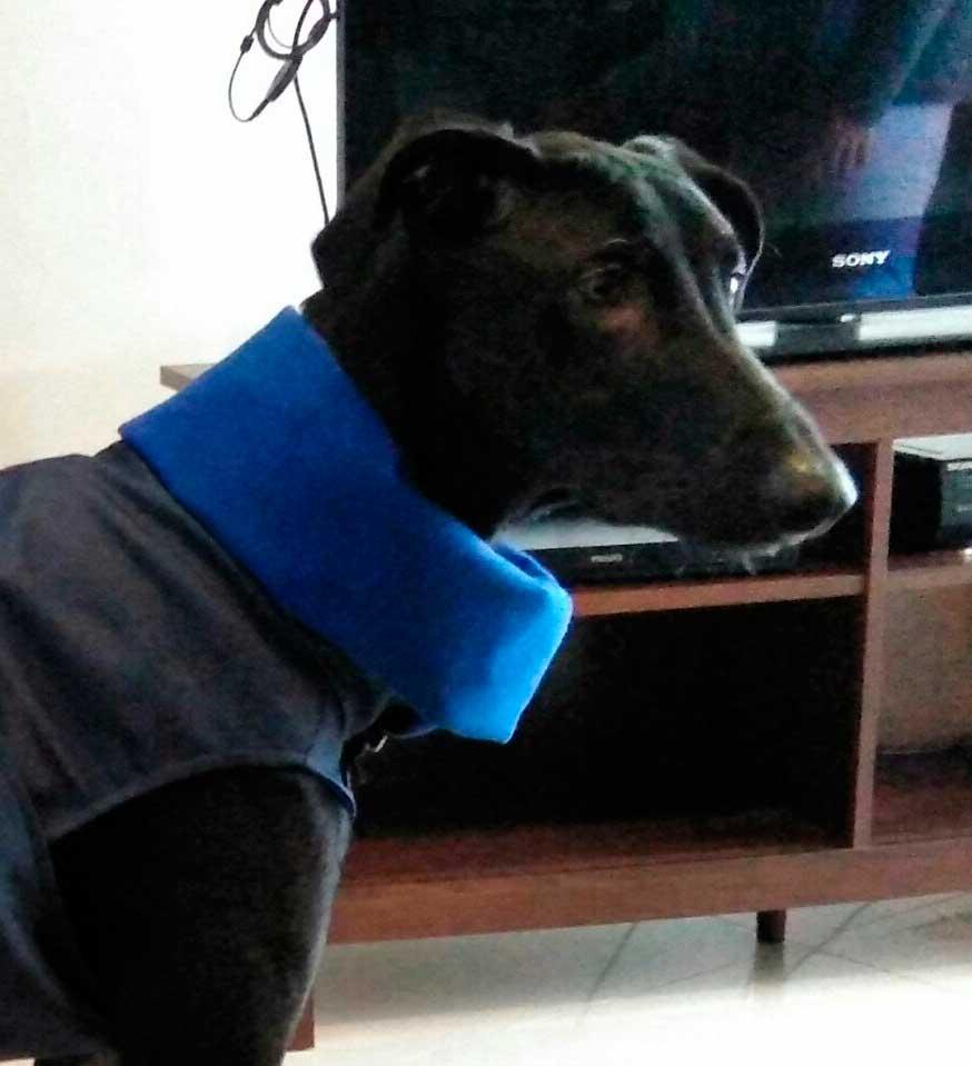 abrigo impermeable azul galgo
