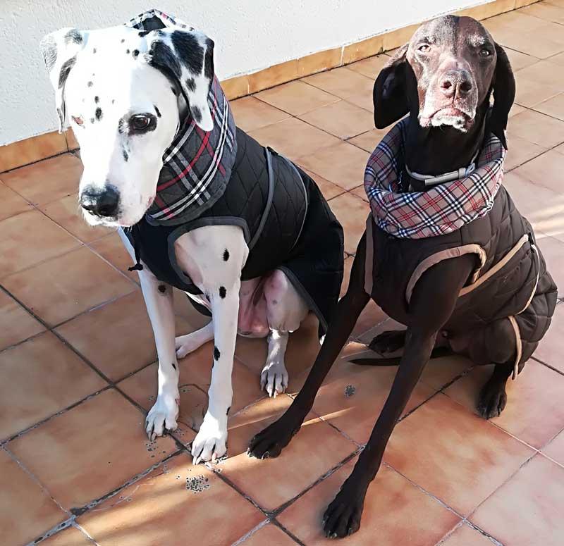 abrigo impermeable negro perro