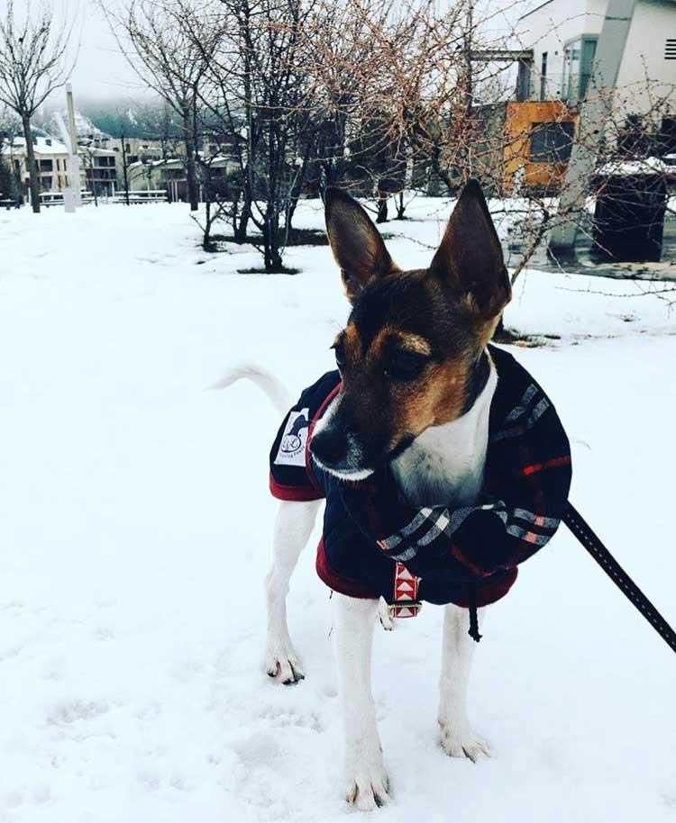 abrigo impermeable perro mini