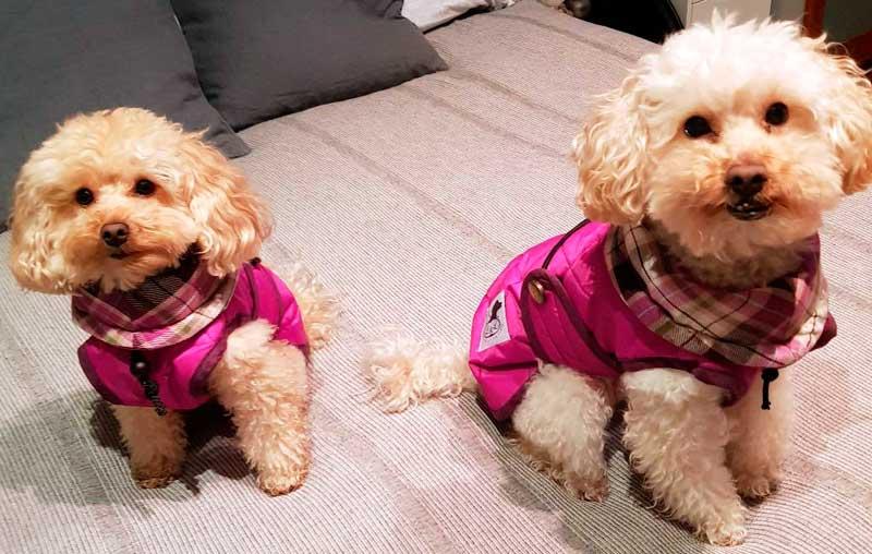 abrigo para perro mini