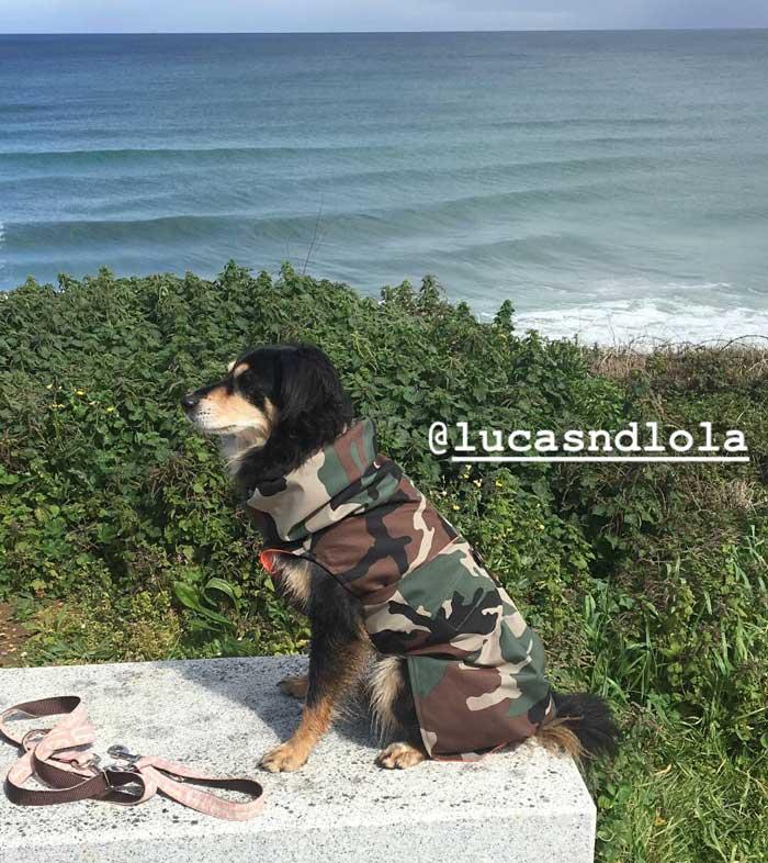 abrigo impermeable perro