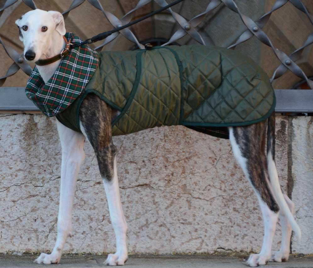 abrigo-verde-galgo