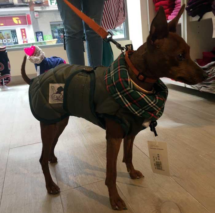 abrigo impermeable verde perro