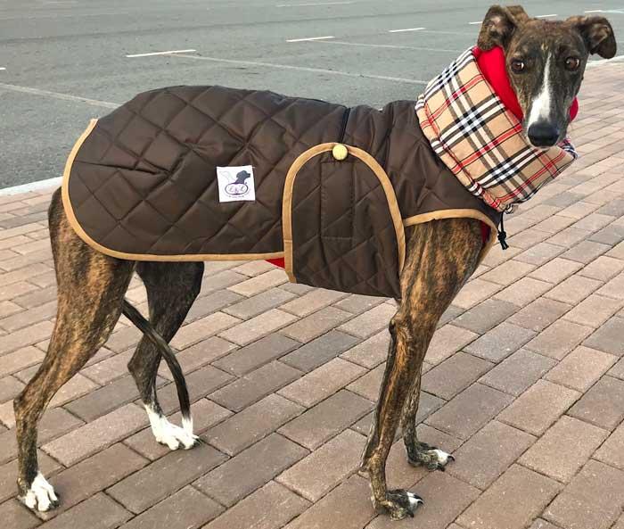 abrigo marron galgo