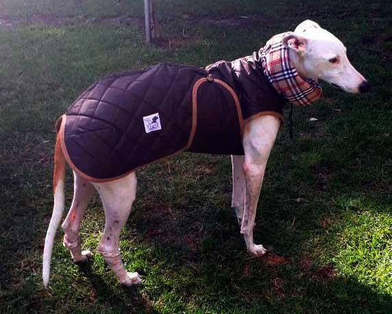 abrigo marron para perro