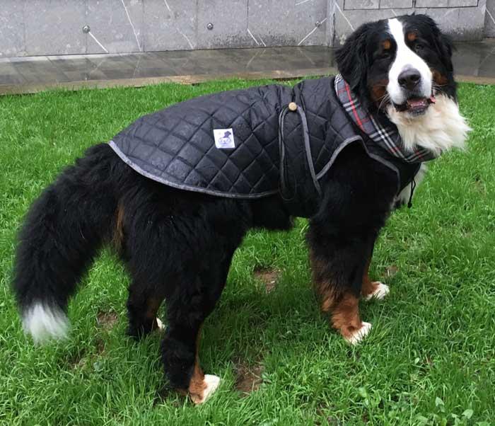 abrigo para perro grande