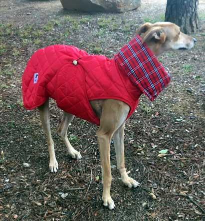 abrigo galgo