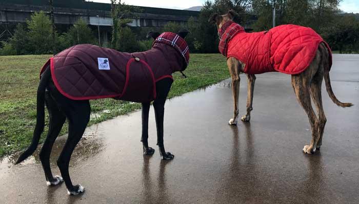 abrigos impermeables para galgo