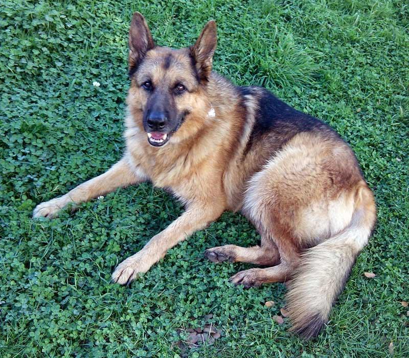 acidos grasos otc perros