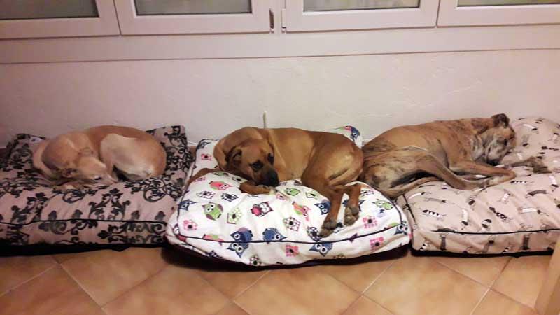 cama mullida para perro