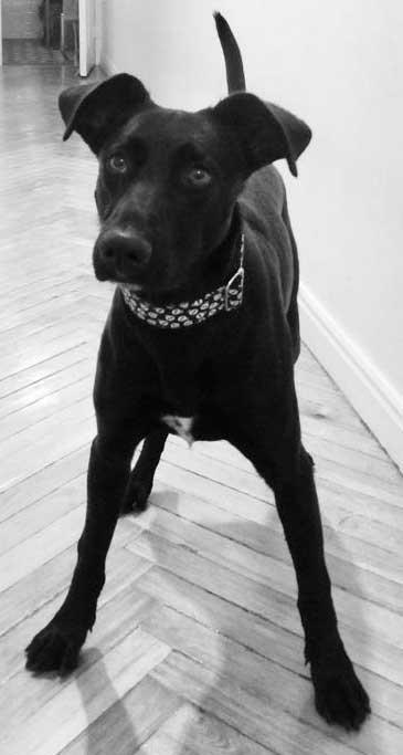 collar calaveras perro
