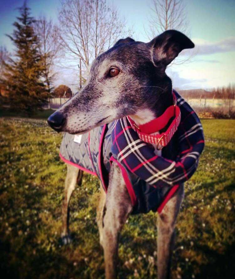 collar martingale perro