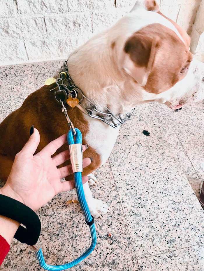 correa cuerda azul acolchada perro
